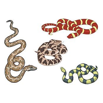 Assorted Snakes Design Water Transfer Temporary Tattoo(fake Tattoo) Stickers NO.13502
