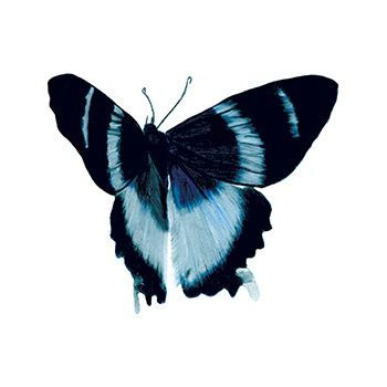 Blue Elegance Butterfly Design Water Transfer Temporary Tattoo(fake Tattoo) Stickers NO.13525