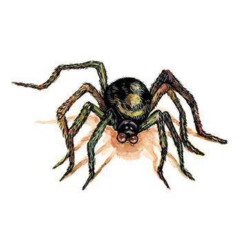 Brown Spider Design Water Transfer Temporary Tattoo(fake Tattoo) Stickers NO.13231
