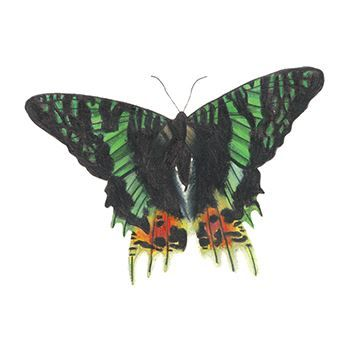 Emerald Shadow Butterfly Design Water Transfer Temporary Tattoo(fake Tattoo) Stickers NO.13707