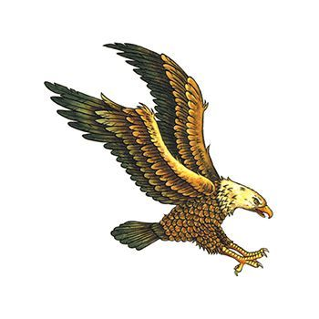 Soaring Flying Eagle Design Water Transfer Temporary Tattoo(fake Tattoo) Stickers NO.12054