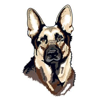 German Shepherd Design Water Transfer Temporary Tattoo(fake Tattoo) Stickers NO.13665
