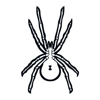 Glow in the Dark Black Spider Design Water Transfer Temporary Tattoo(fake Tattoo) Stickers NO.14429