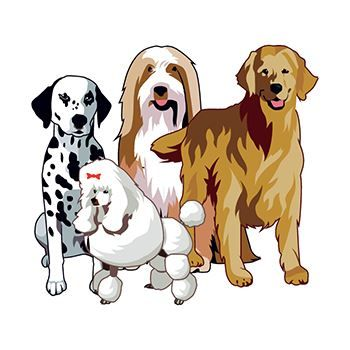 Group of Dogs Design Water Transfer Temporary Tattoo(fake Tattoo) Stickers NO.13687