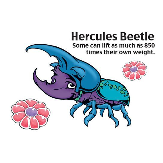 Hercules Beetle Design Water Transfer Temporary Tattoo(fake Tattoo) Stickers NO.14611