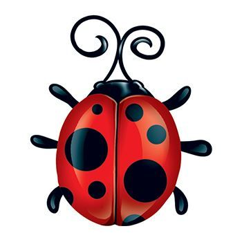 Ladybug Design Water Transfer Temporary Tattoo(fake Tattoo) Stickers NO.13641