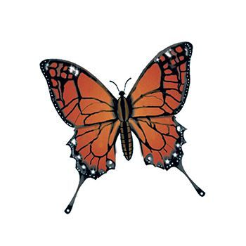 Monarch Butterfly Design Water Transfer Temporary Tattoo(fake Tattoo) Stickers NO.13563