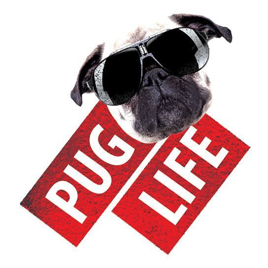 Pug Life Metallic Design Water Transfer Temporary Tattoo(fake Tattoo) Stickers NO.14225