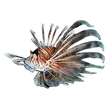 Spiny Fish Design Water Transfer Temporary Tattoo(fake Tattoo) Stickers NO.13691