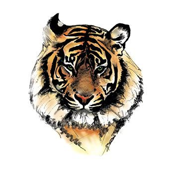Tiger Face Design Water Transfer Temporary Tattoo(fake Tattoo) Stickers NO.13147
