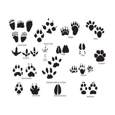 Puppy Dog Foot Design Water Transfer Temporary Tattoo(fake Tattoo) Stickers NO.10780