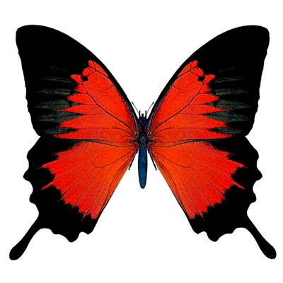 Red And Black Butterfly Design Water Transfer Temporary Tattoo(fake Tattoo) Stickers NO.11076