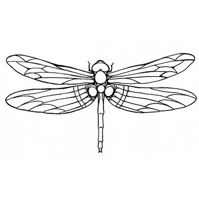 Best Dragonfly Design Water Transfer Temporary Tattoo(fake Tattoo) Stickers NO.11153