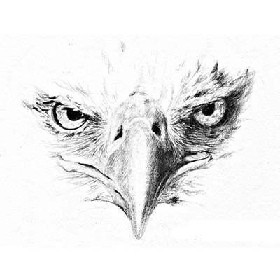Eagle Design Water Transfer Temporary Tattoo(fake Tattoo) Stickers NO.11183