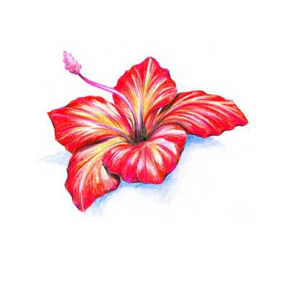 Hibiscus Design Water Transfer Temporary Tattoo(fake Tattoo) Stickers NO.11214