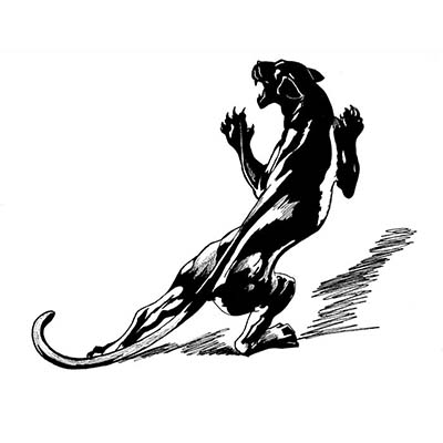 Black panther design Water Transfer Temporary Tattoo(fake Tattoo) Stickers NO.11405
