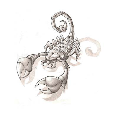 Scorpion Design Water Transfer Temporary Tattoo(fake Tattoo) Stickers NO.11507