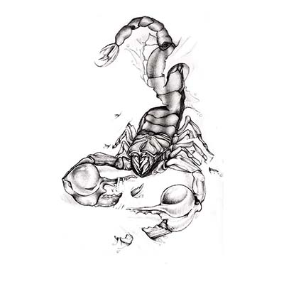 Scorpion Design Water Transfer Temporary Tattoo(fake Tattoo) Stickers NO.11510