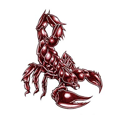 Scorpion Design Water Transfer Temporary Tattoo(fake Tattoo) Stickers NO.11511