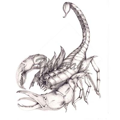 Scorpion Design Water Transfer Temporary Tattoo(fake Tattoo) Stickers NO.11512