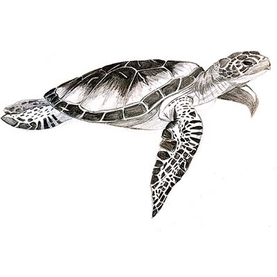 Turtle Design Water Transfer Temporary Tattoo(fake Tattoo) Stickers NO.11673