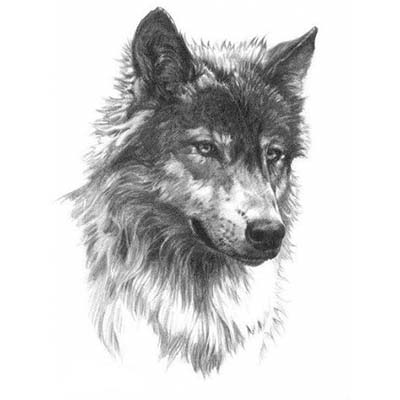 Wolf Design Water Transfer Temporary Tattoo(fake Tattoo) Stickers NO.11692