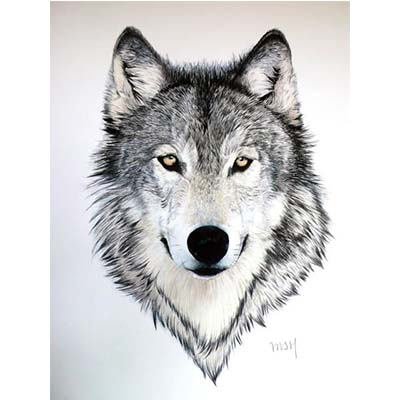 Wolf Design Water Transfer Temporary Tattoo(fake Tattoo) Stickers NO.11695